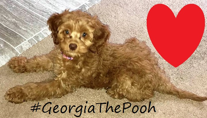 Meet Our Sweet Fur-Baby: #GeorgiaThePooh