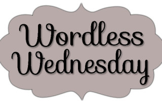 Wordless Wednesday:  A First For Me!!