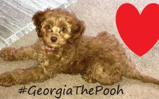 Meet Our Sweet Fur-Baby: #GeorgiaThePooh